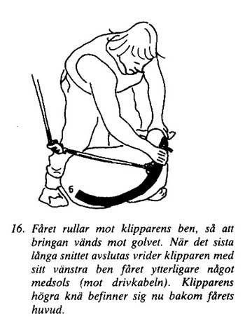 Klipp16